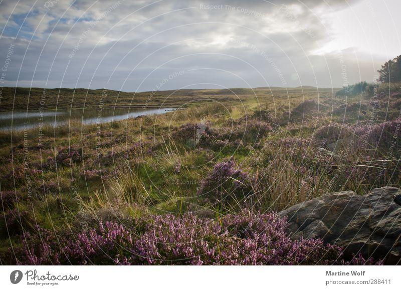 oh holde Heide Ferien & Urlaub & Reisen Ausflug Ferne Freiheit Umwelt Natur Landschaft Pflanze Sonne Sträucher Grünpflanze Wildpflanze Teich Großbritannien