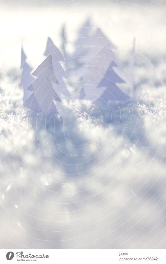 kleine weiße welt Natur Weihnachten & Advent weiß Pflanze Baum ruhig Winter Landschaft kalt Schnee hell Eis natürlich glänzend Schönes Wetter Papier