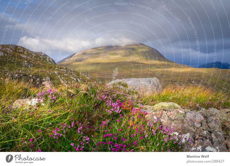 heiter bis wolkig Ferien & Urlaub & Reisen Ausflug Berge u. Gebirge Natur Landschaft Pflanze Wolken Wetter Gras Sträucher Moos Hügel Heide Applecross