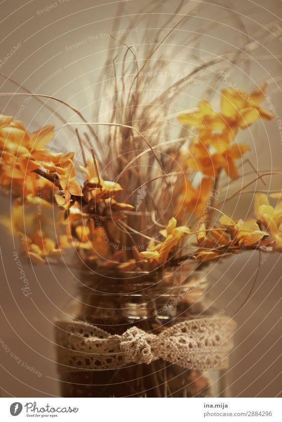 forsythienstrauß Umwelt Natur Pflanze Frühling Blume Gras Blüte Schnur Knoten Schleife ästhetisch Farbe Frieden Idylle Religion & Glaube ruhig Umweltschutz