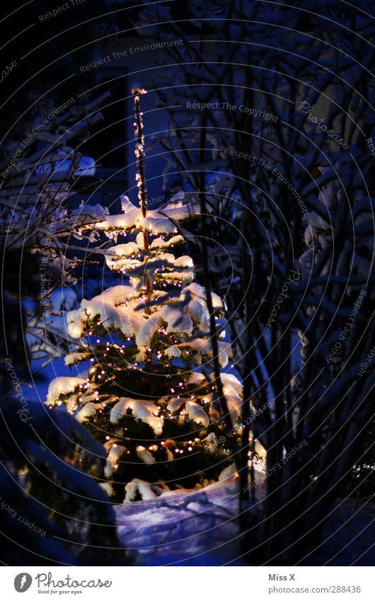 Weihnachtsbäumle Weihnachten & Advent weiß Baum Winter kalt Schnee Garten Beleuchtung Schneefall glänzend leuchten Dekoration & Verzierung Weihnachtsbaum Tanne Weihnachtsdekoration Lichterkette
