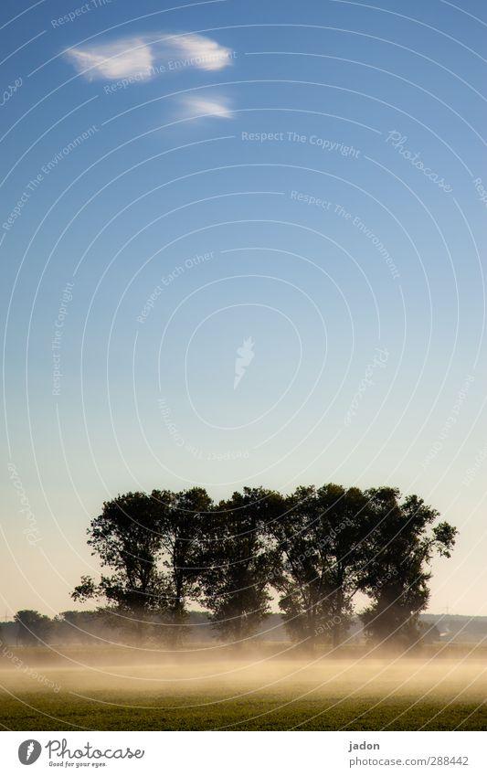 der weisse nebel wunderbar. Landschaft Pflanze Urelemente Himmel Wolken Herbst Nebel Baum Feld fantastisch blau Stimmung Horizont Natur Allee Brandenburg