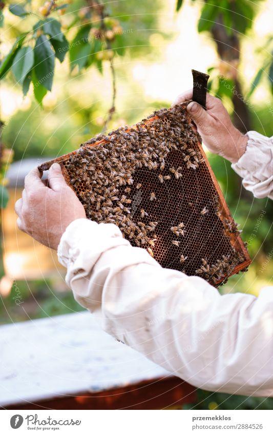 Imker, der im Bienenstock arbeitet. Sommer Arbeit & Erwerbstätigkeit Mensch Mann Erwachsene Natur Tier zeichnen natürlich Ackerbau Bienenkorb Bienenzucht