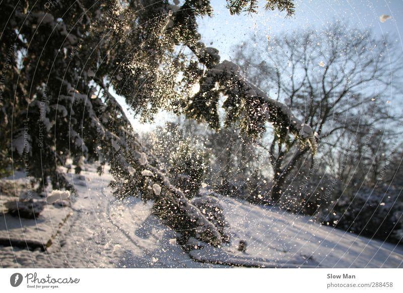 just snowy Winter Sonnenlicht Wetter Schönes Wetter Eis Frost Schnee Schneefall Stimmung Freude schön Idylle Tanne Schneeflocke besinnlich Glätte Farbfoto