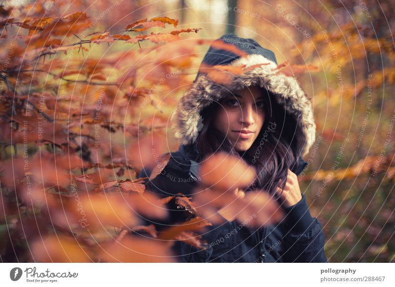 Es herbstet sehr (1) Mensch Frau Natur Jugendliche Pflanze Baum Blatt Landschaft Erwachsene Wald Junge Frau Herbst Leben feminin Gefühle 18-30 Jahre