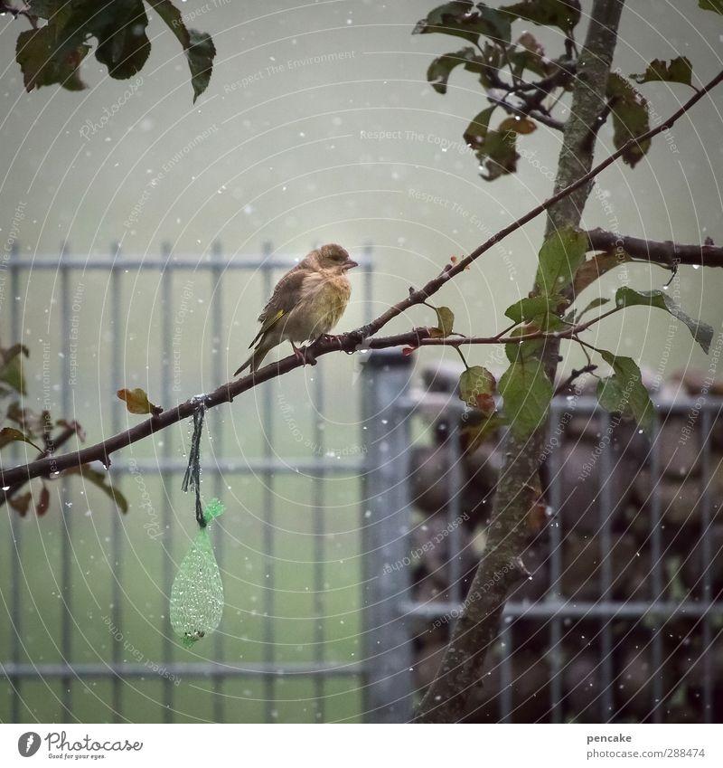 he, nachschub! Natur Baum Blatt Tier Winter Schnee Glück Stein Essen Garten Schneefall Vogel Eis Wildtier sitzen warten