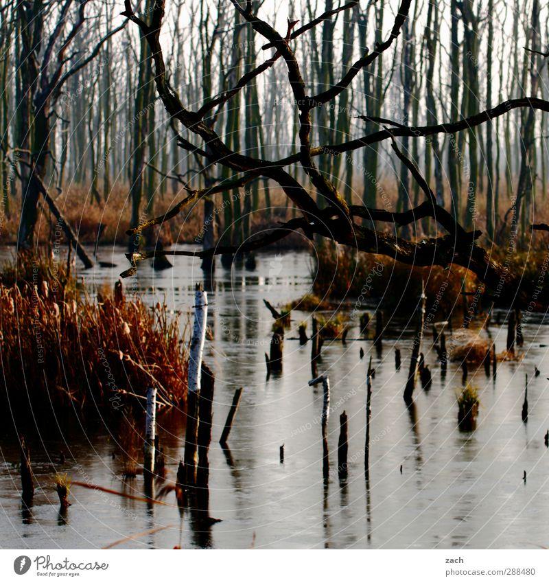 Herbst Natur Wasser Pflanze Baum Landschaft Wald Umwelt kalt Holz braun Nebel Vergänglichkeit Verfall Moos schlechtes Wetter verblüht