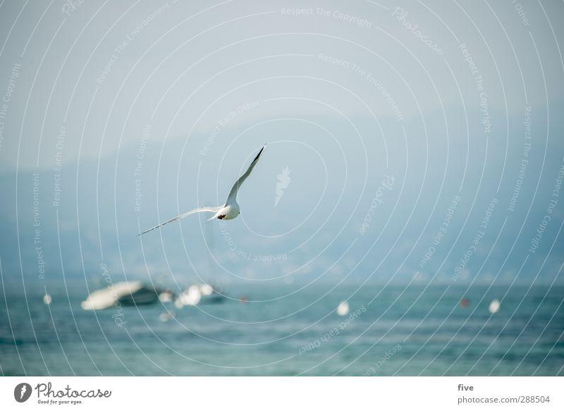 Schräglage Himmel Natur Ferien & Urlaub & Reisen Wasser Sommer Tier Berge u. Gebirge See Luft Felsen Vogel Wasserfahrzeug fliegen Italien Seeufer Hügel