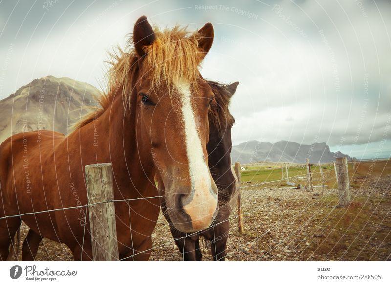 Zaungäste Himmel Natur Tier Wolken Umwelt braun natürlich Tierpaar Schönes Wetter niedlich Pferd Neugier Freundlichkeit Tiergesicht Zaun Weide