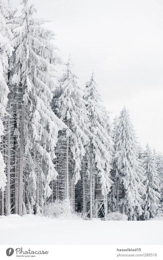 Thüringer Winterwald Natur schön weiß Baum Erholung ruhig Ferne Wald Umwelt Berge u. Gebirge Schnee hell Schneefall Freizeit & Hobby Feld