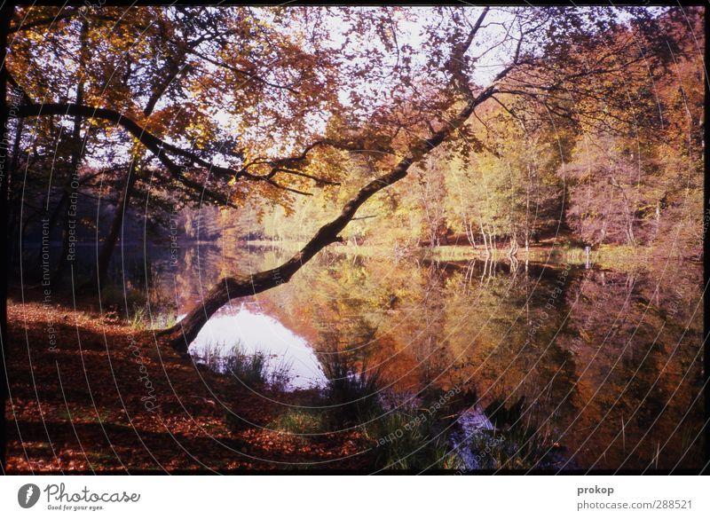 Herbstbild Himmel Natur Pflanze schön Wasser Baum Landschaft Blatt ruhig Wolken Wald Umwelt Gefühle natürlich Küste