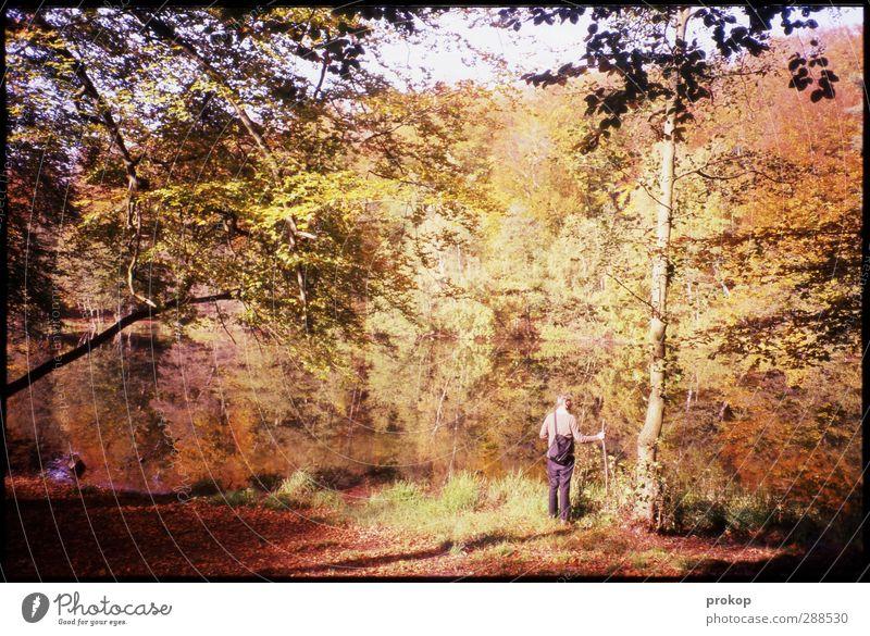 Herbstbild mit Wanderer Mensch Himmel Natur Mann Jugendliche Wasser Pflanze Baum Sonne Blatt Einsamkeit Landschaft Erholung Erwachsene Wald Umwelt