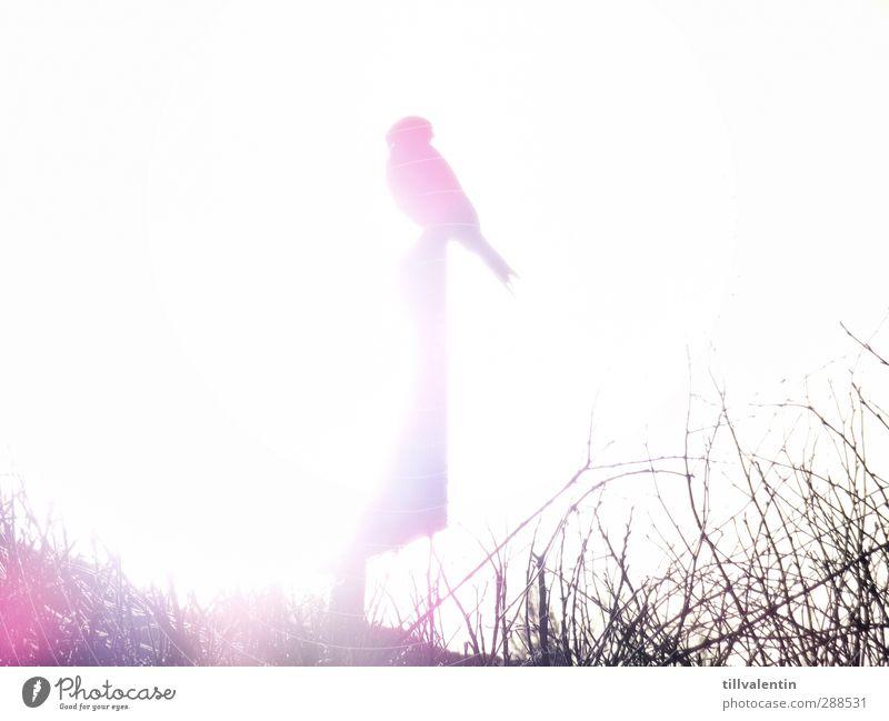 Hell erleuchtet Himmel weiß Sonne Tier ruhig Ferne Farbstoff Freiheit hell Vogel Klima sitzen Feder ästhetisch Sträucher Kreis