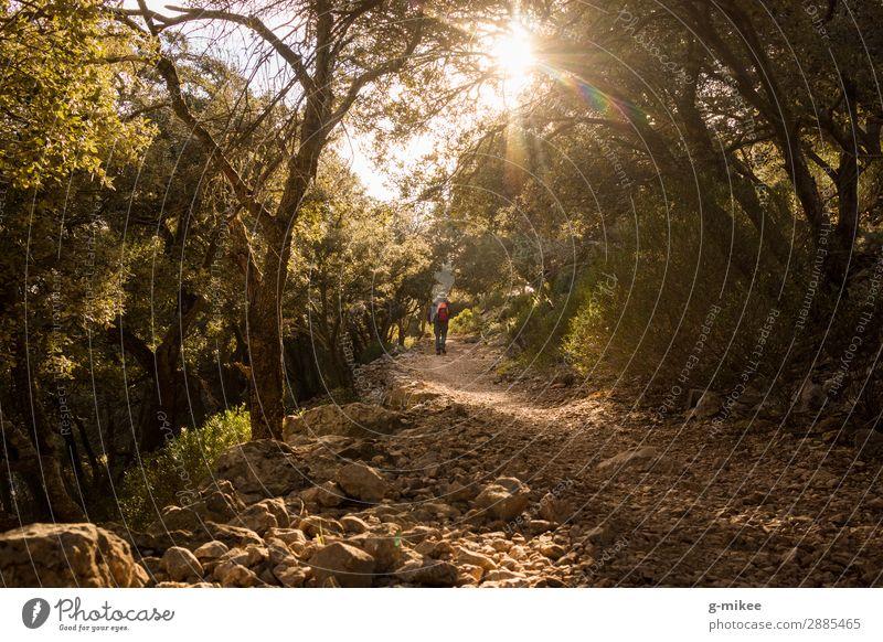 Wandern in der Serra de Tramuntana auf Mallorca Mensch maskulin Mann Erwachsene 1 Natur Landschaft Erde Sonnenlicht Baum Wald Felsen Berge u. Gebirge entdecken