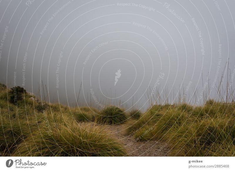 Wandern im Nebel Natur Landschaft schlechtes Wetter Gras Grünpflanze Berge u. Gebirge entdecken wandern bedrohlich dunkel gruselig trist Angst Nebellandschaft