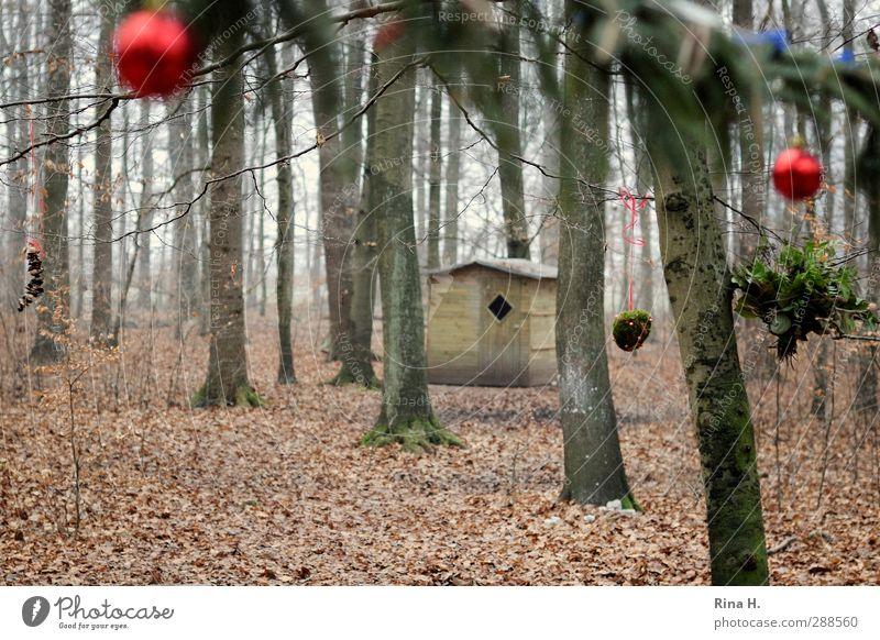 Schmucker Wald Weihnachten & Advent Winter Baum Hütte Christbaumkugel Dekoration & Verzierung hängen authentisch natürlich rot Lebensfreude Vorfreude Tradition