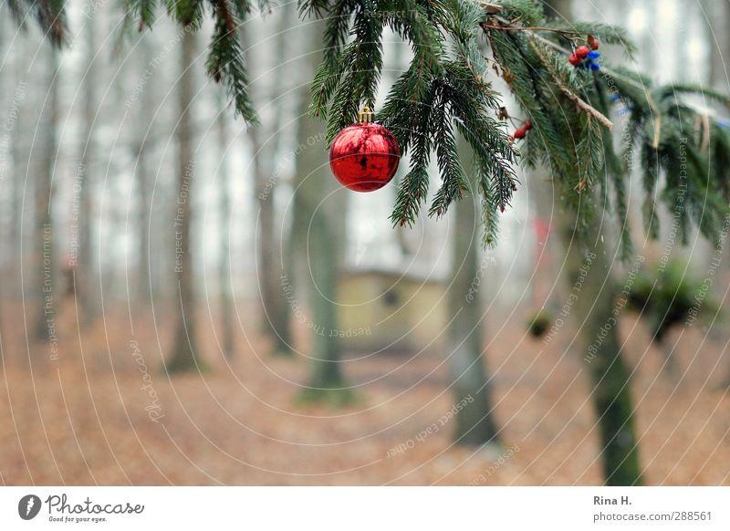 Schmucker Wald II Feste & Feiern Weihnachten & Advent Natur Winter Baum Hütte Dekoration & Verzierung Christbaumkugel hängen authentisch natürlich grün rot