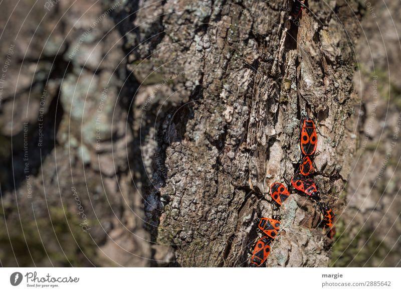 Uneinigkeit! Natur Tier Frühling Schönes Wetter Baum Grünpflanze Garten Park Wald Wildtier Käfer Tiergruppe Tierfamilie braun rot schwarz krabbeln Wanze