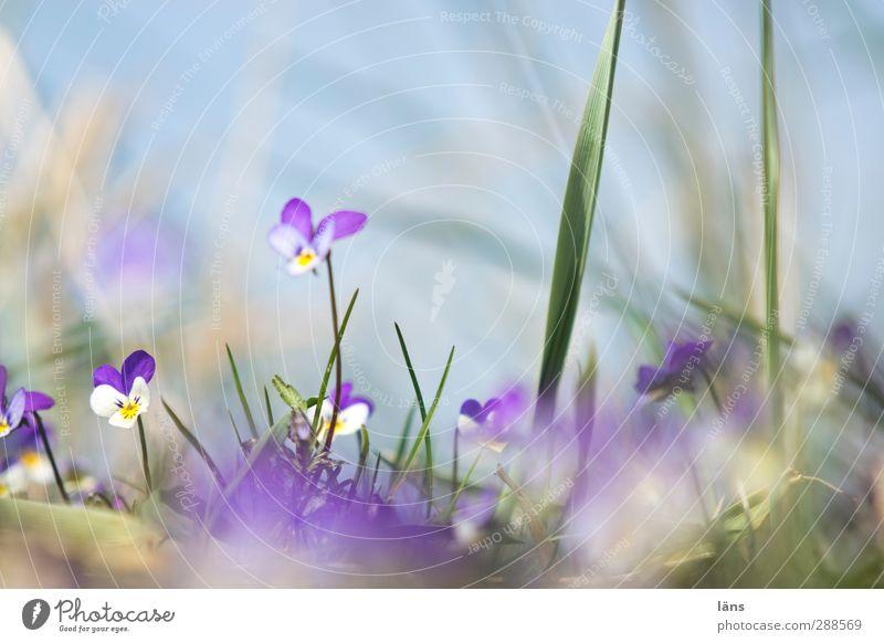 Hiddensee | wenn ich groß bin Himmel Natur blau grün schön Pflanze Blume Strand Landschaft Umwelt Gras Frühling Küste Wachstum Schönes Wetter Perspektive