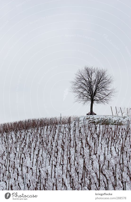 Unser Treffpunkt... Natur Landschaft Winter schlechtes Wetter Schnee Baum Nutzpflanze Feld Hügel kalt oben weiß ruhig Sorge Trauer Tod Sehnsucht Einsamkeit
