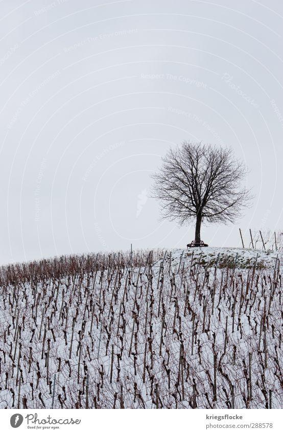 Unser Treffpunkt... Natur weiß Baum Erholung Landschaft Einsamkeit ruhig Winter kalt Traurigkeit Schnee Tod oben Feld Idylle Beginn
