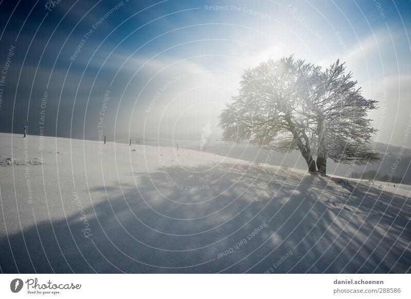 sackekalt blau Ferien & Urlaub & Reisen weiß Baum Winter Schnee hell Eis Wind Klima Frost Winterurlaub Schwarzwald