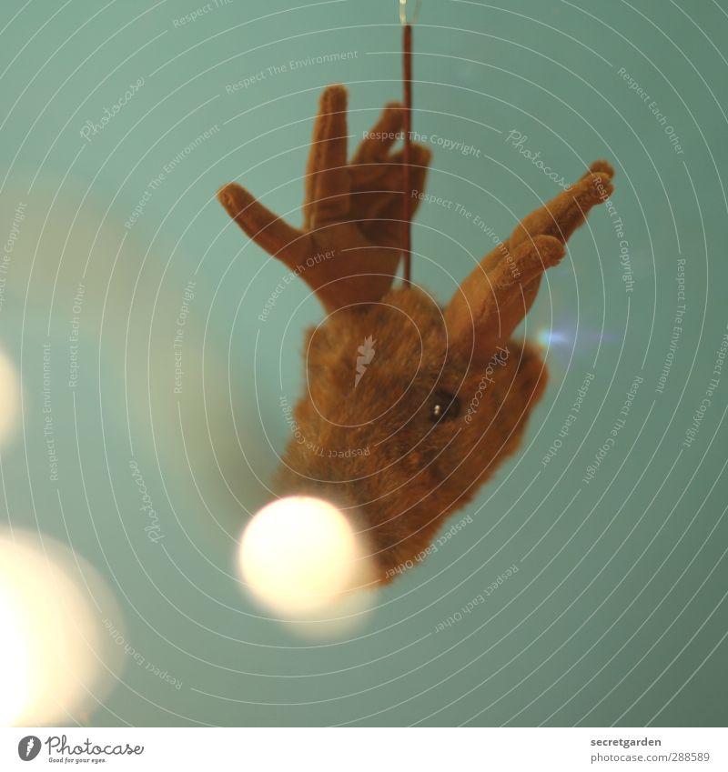 rudolph, the white nose reindeer. Weihnachten & Advent grün schön weiß Tier Feste & Feiern braun Wildtier leuchten Dekoration & Verzierung niedlich weich Stoff