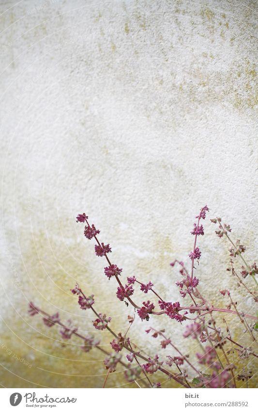 Kriecher ... Natur Pflanze Sommer rot Blume Wand Herbst Mauer Frühling Blüte Stein Feste & Feiern Garten Kunst rosa Park