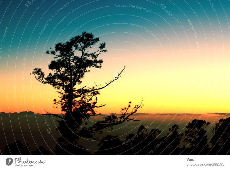 |_ Natur Landschaft Himmel Wolken Pflanze Baum blau gelb Farbfoto mehrfarbig Außenaufnahme Abend Dämmerung Kontrast Silhouette Sonnenaufgang Sonnenuntergang