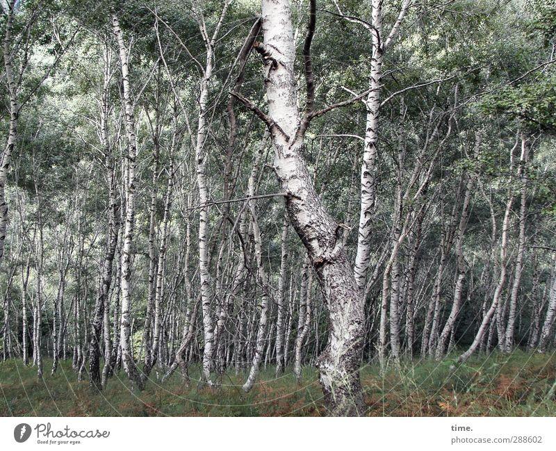 Wohnzimmer Natur Pflanze Baum Blatt ruhig Landschaft Wald Umwelt Wiese Holz Zufriedenheit Wachstum stehen Wandel & Veränderung Zusammenhalt