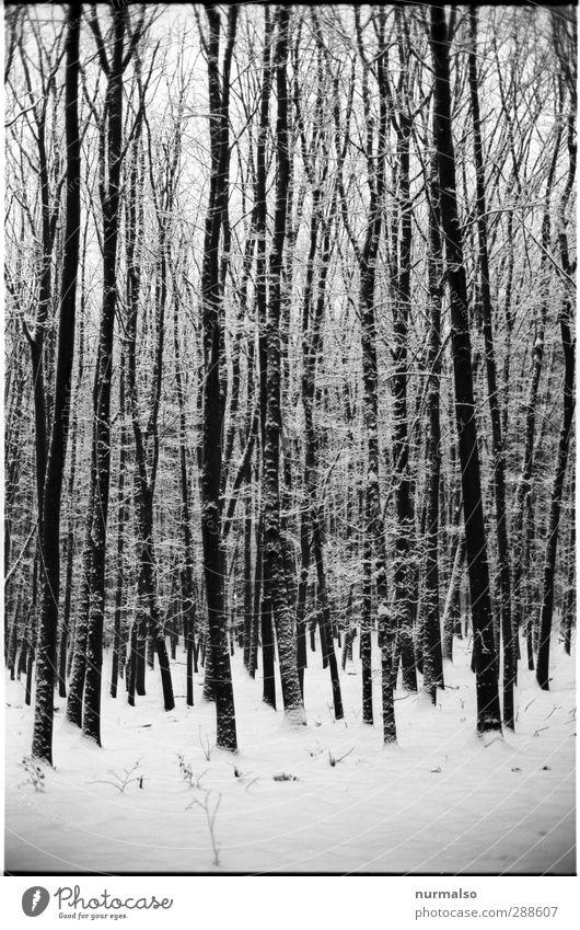 Winter 12122012 bei 1211 Bildern Natur weiß Baum Landschaft schwarz Erholung Wald Umwelt dunkel kalt Schnee Schneefall Stimmung Kunst Eis