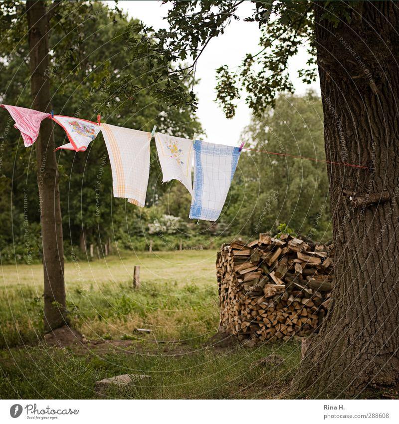Landleben Sommer Schönes Wetter Baum Garten Wäsche Holz hängen authentisch natürlich Sauberkeit Natur rein Eiche Handtuch Farbfoto Außenaufnahme Menschenleer