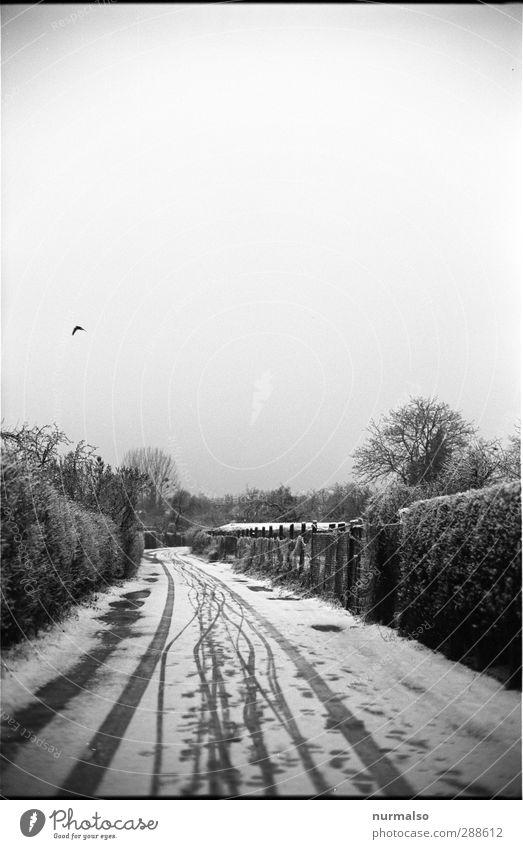 Winter 12122012 1212 Fotos weiß Einsamkeit schwarz Ferne Umwelt dunkel kalt Schnee Wege & Pfade Garten Schneefall Kunst Eis Klima ästhetisch