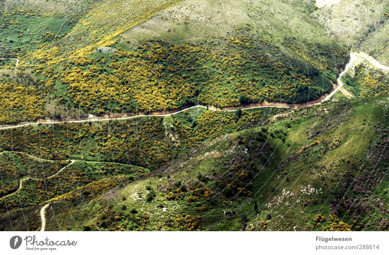 My Way Natur Sommer Pflanze Baum Blume Landschaft Wald Umwelt Wiese Berge u. Gebirge Gras Wege & Pfade Felsen Feld Klima wandern