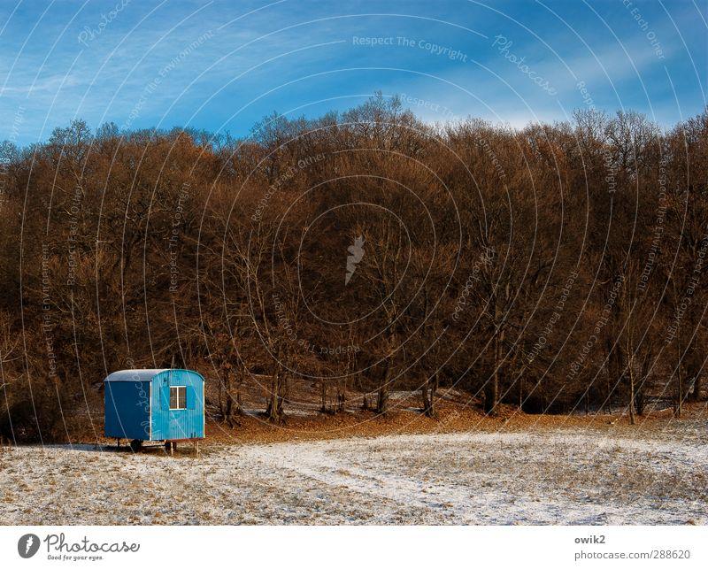 Himmel auf Erden Umwelt Natur Landschaft Pflanze Winter Klima Wetter Schönes Wetter Eis Frost Schnee Baum Wald Bauwagen Fenster leuchten stehen Freundlichkeit