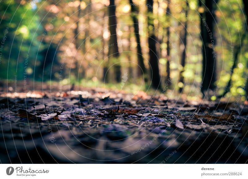 Waldboden wandern Umwelt Natur Landschaft Tier Herbst Schönes Wetter Pflanze Baum beobachten genießen krabbeln Ende Erholung Farbfoto mehrfarbig Außenaufnahme