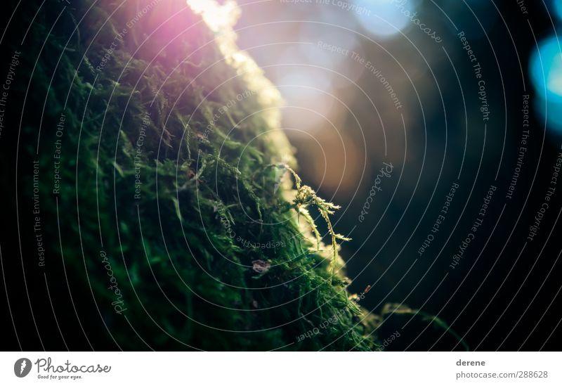 Pleasant Light. Umwelt Natur Landschaft Tier Pflanze Moos Wald Urwald Garten beobachten Duft leuchten ästhetisch einfach Freundlichkeit weich Warmherzigkeit