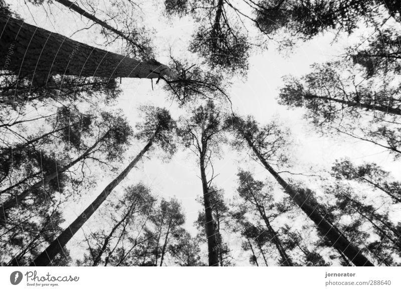 B A E U M E Umwelt Natur Pflanze Herbst Baum Wald schwarz weiß Baumkrone Baumstamm Blatt Ast dunkel Düsterwald kahl Mitte Schwarzweißfoto Außenaufnahme