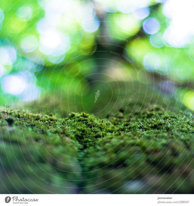 Mikro-Wiese Umwelt Natur Pflanze Himmel Sommer Schönes Wetter Baum Park Wald grün Baumkrone Baumrinde Moos Moosteppich Blätterdach Schwache Tiefenschärfe