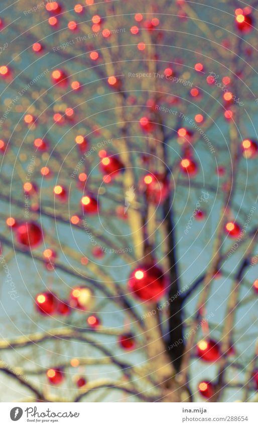 weihnachtsbaum Weihnachten & Advent blau Baum rot Winter Herbst Feste & Feiern Dekoration & Verzierung Ast Punkt Weihnachtsbaum Schmuck Blase Christbaumkugel
