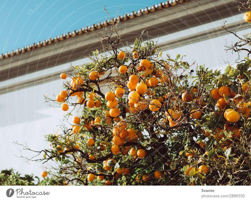 Orangenbaum in Portugal Baum Faro Ferien & Urlaub & Reisen Frucht Obstbaum Großstadt Wachstum frisch Farbfoto Menschenleer Tag