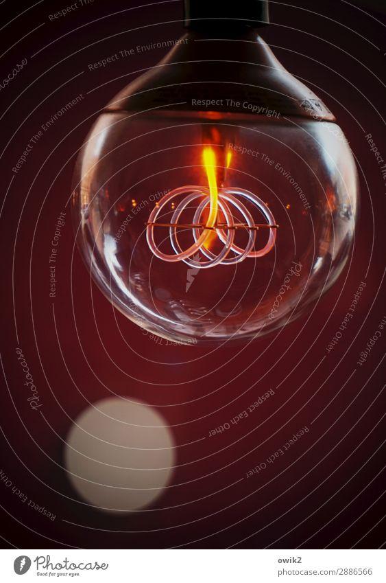 Glühwürmchen Lampe leuchten Glas rund Kunststoff Glühbirne Spirale Erkenntnis glühen Leuchtkraft Lampenlicht Leuchtkörper Energiesparlampe Leuchtstoff