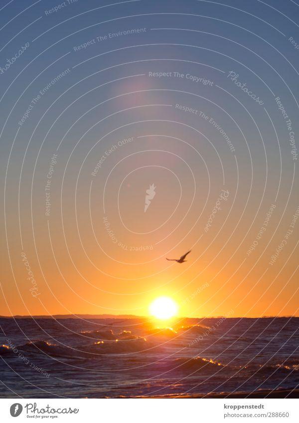 Stürmischer Auftritt Natur Luft Wasser Horizont Sonne Sonnenaufgang Sonnenuntergang Sonnenlicht Herbst Schönes Wetter Wellen Ostsee Insel Usedom Romantik