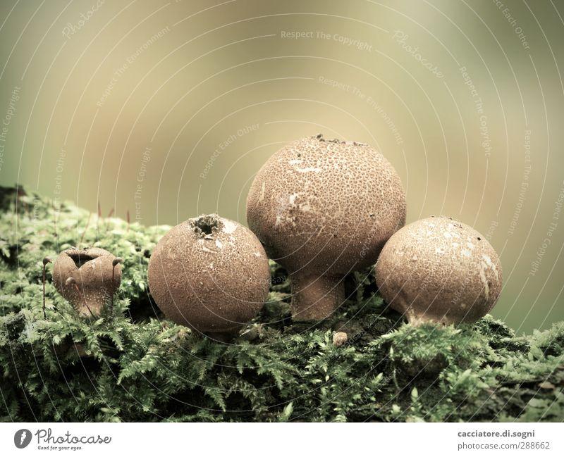 old friends Natur alt Pflanze grün Erholung ruhig dunkel Wald Umwelt Herbst natürlich braun Freundschaft ästhetisch Vergänglichkeit nah