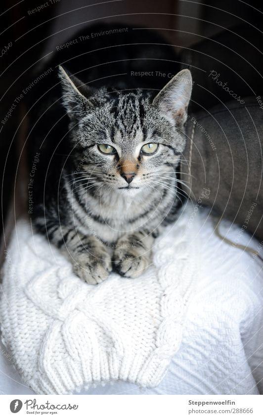 Winterkatze Tier Haustier Katze Tiergesicht Pfote 1 Tierjunges Zufriedenheit Hauskatze grün Tigerfellmuster Wärme Heizung gemütlich kuschlig Stiefel Schuhe