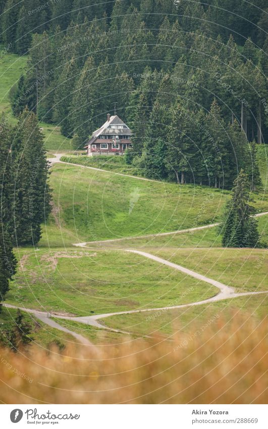 Long way home Natur Landschaft Sommer Baum Gras Haus stehen Häusliches Leben Ferne grau grün rot weiß Sicherheit Schutz Geborgenheit ruhig Einsamkeit Wald