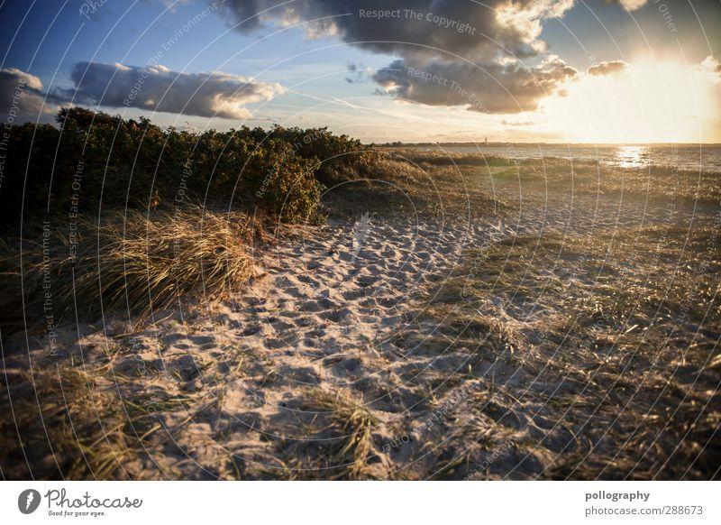relaxing area Himmel Natur Ferien & Urlaub & Reisen Sommer Pflanze Meer Blatt Strand Wolken Landschaft Ferne Umwelt Wärme Gefühle Gras Freiheit