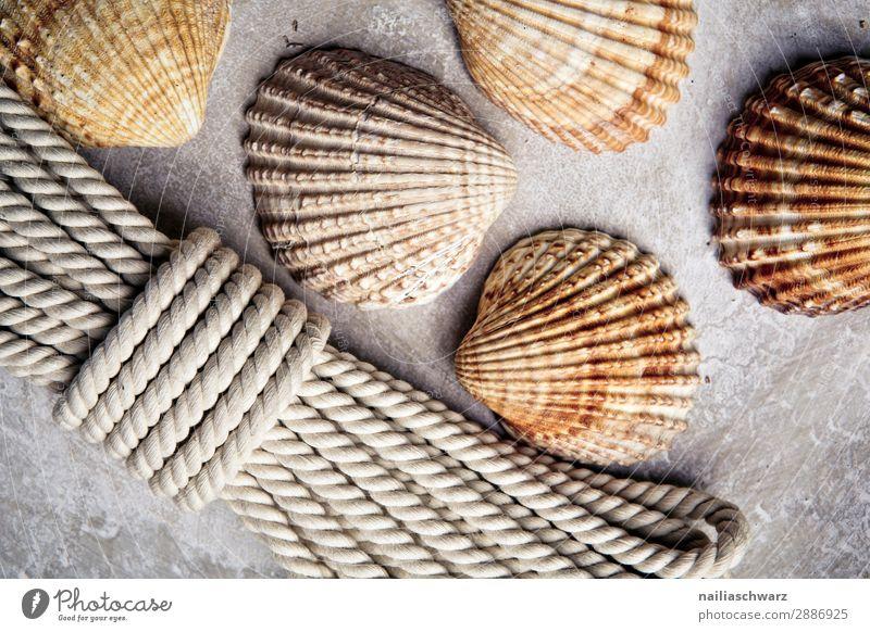 Muscheln und Seil Freizeit & Hobby Basteln Strand Souvenir Muschelschale Muschelform Ornament Linie Knoten Schleife authentisch elegant rund schön braun grau