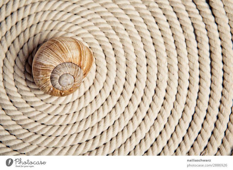 Spirale Schnecke Schneckenhaus Seil Seilrolle Zeichen Ornament Linie einfach elegant schön lang nah natürlich stark braun Kraft Sicherheit Schutz beweglich