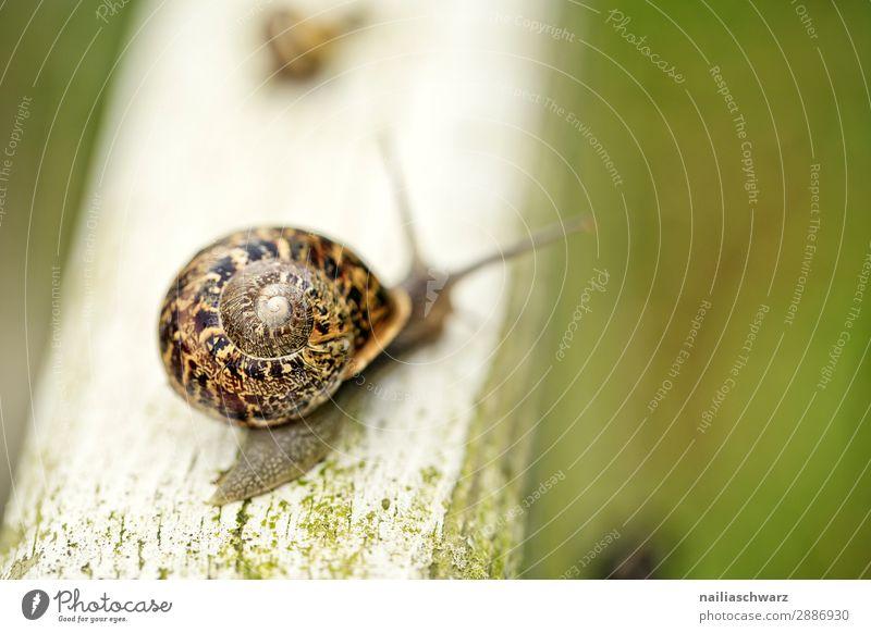 Garten-Schnecke Helicidae Riesenglanzschnecke Gartentier Sommer außerhalb Band gebändert gelb schwarz winzig klein Schädling Tier Schleim schleimig krabbeln